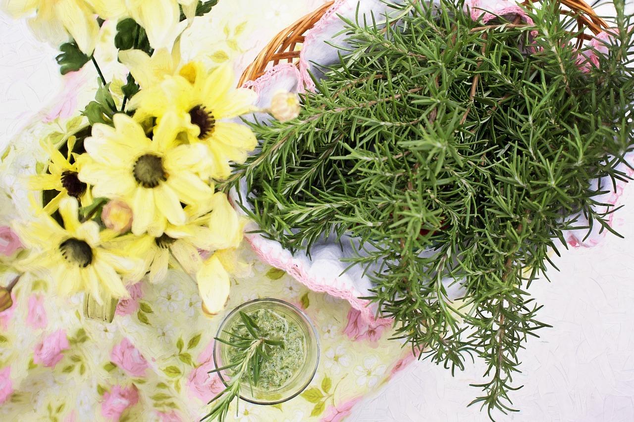 Olio essenziale di rosmarino: proprietà e utilizzo