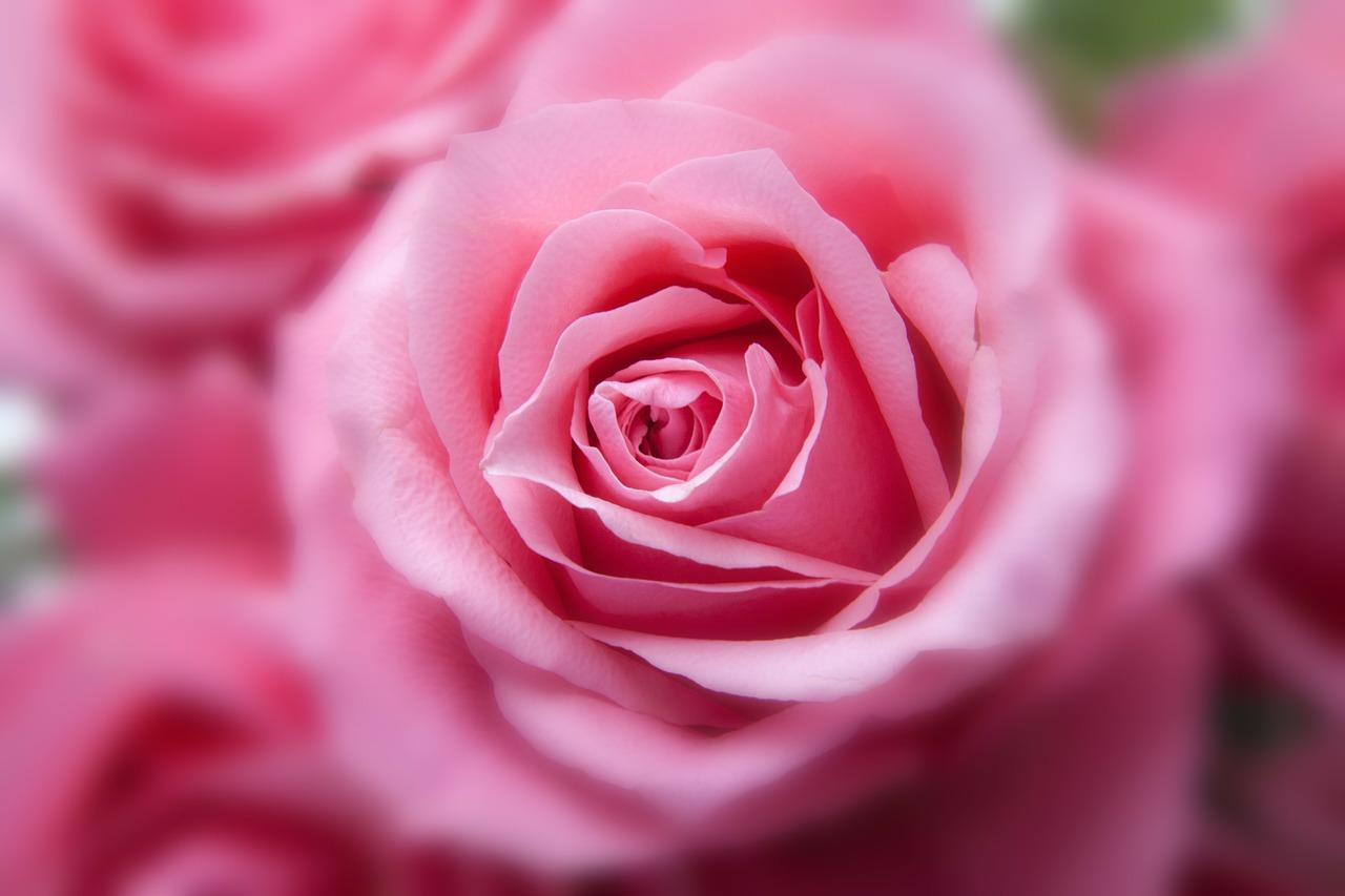 olio essenziale di rosa damascena proprietà