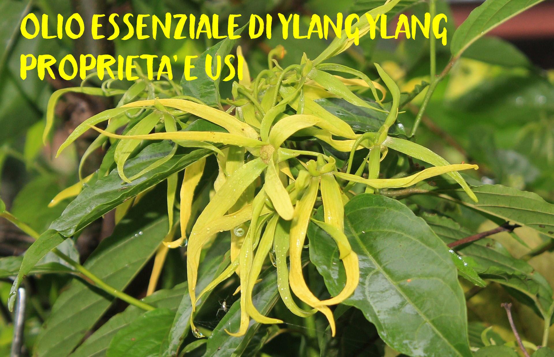 Olio essenziale di ylang ylang: proprietà e usi