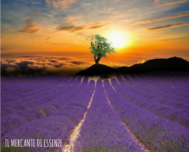 Corso di aromaterapia Bologna 7 maggio: alla scoperta degli oli essenziali sul piano sottile