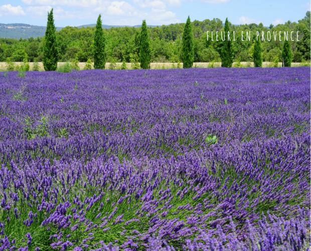 Corso di aromaterapia Padova 17 giugno: i chakra e la magia delle piante