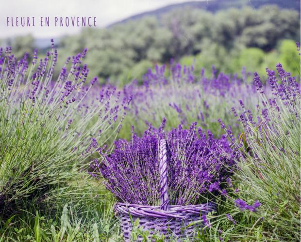 Corso di aromaterapia Torino 28 maggio: i chakra e la magia delle piante