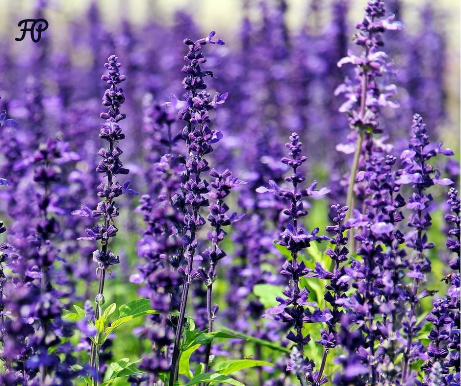 corso di aromaterapia milano