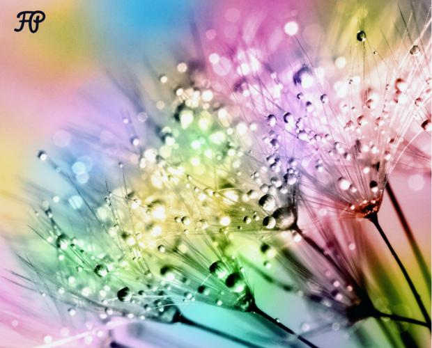 Corso di aromaterapia Milano 01 ottobre: i chakra e la magia delle piante