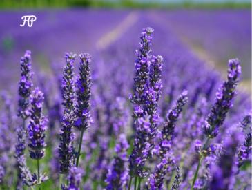 corso aromaterapia milano