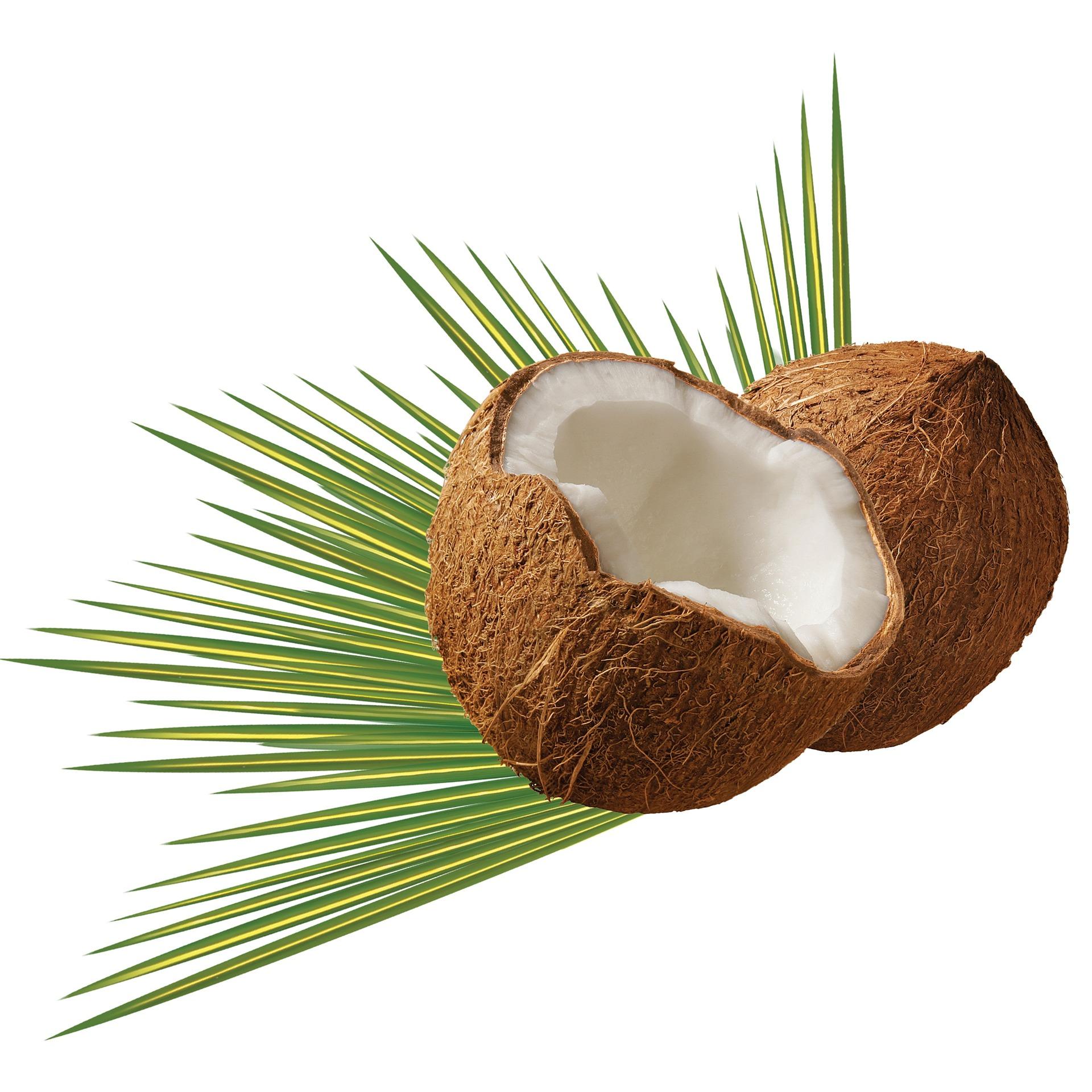 Olio di cocco : benefici per i capelli