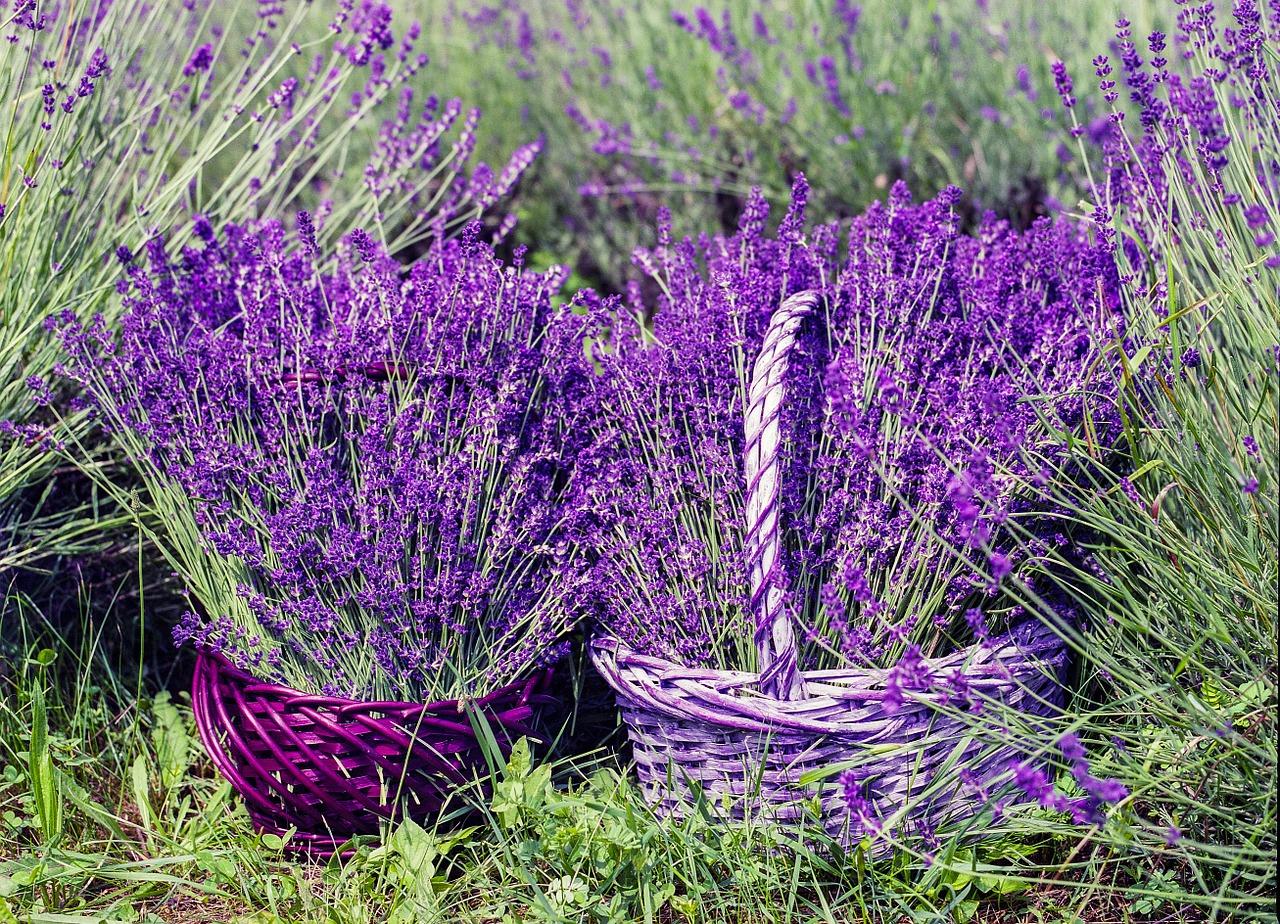corsi di aromaterapia