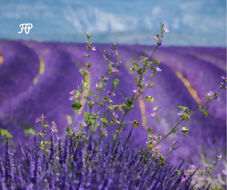 corso aromaterapia torino